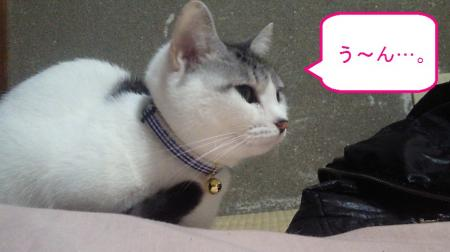 004_convert_20110119124618.jpg