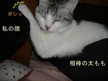 004_convert_20110220190027.jpg