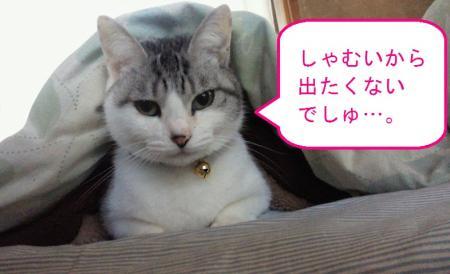 006_convert_20110130132012.jpg