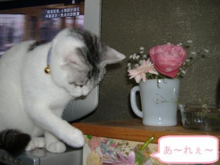 006_convert_20110218130322.jpg