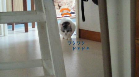 007_convert_20110222124656.jpg