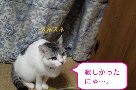 009_convert_20110206125444.jpg