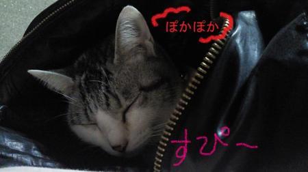 010_convert_20110119125449.jpg