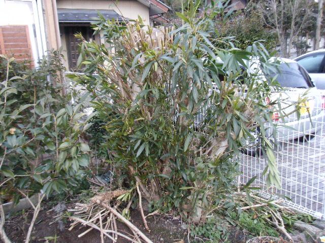伸び放題の木