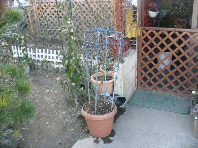 春がすみを玄関前に置きました。