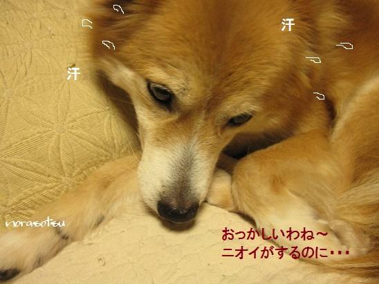 009_20120327074733.jpg