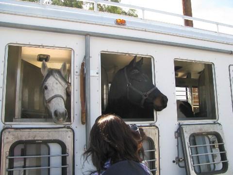 ビルのお馬さんたち