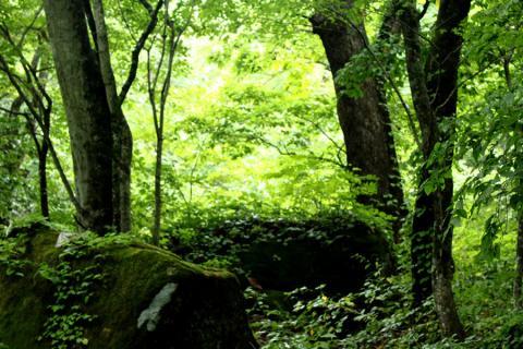 奥入瀬の深い森
