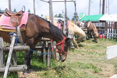 馬。平和そう。