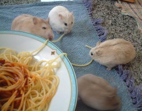 ハムスターの食事