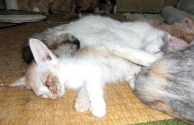 Aさん宅の猫たち