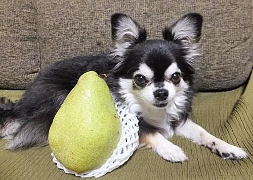 大きな梨だよ!