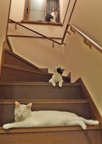 階段トリオ