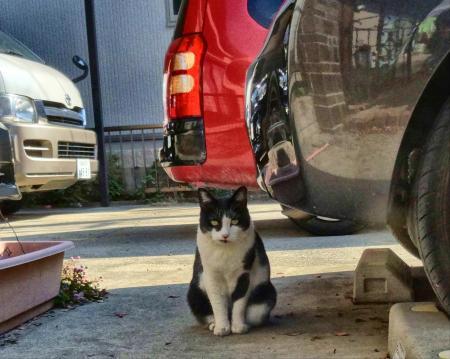 地域猫さん
