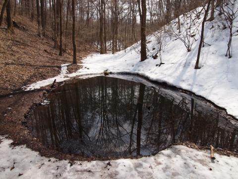 どんぐり池110315