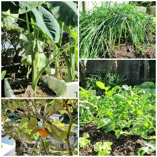 義父の菜園