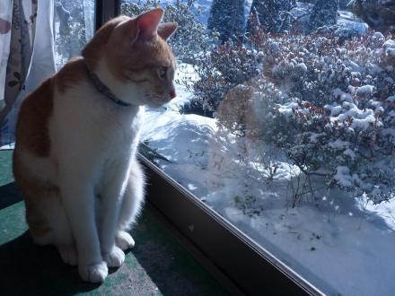 シューと雪