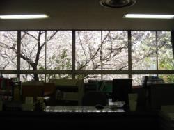 sakura-counter1.jpg