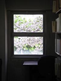sakura-syoko.jpg