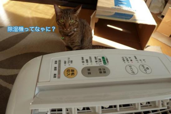 10_20110919103247.jpg