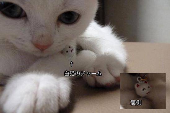 14_20110919105054.jpg