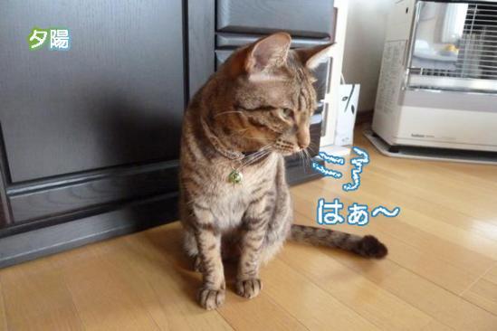1_20111030235904.jpg