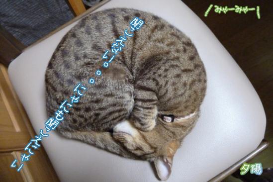 2_20110819230748.jpg
