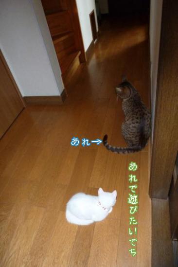 2_20110903083722.jpg