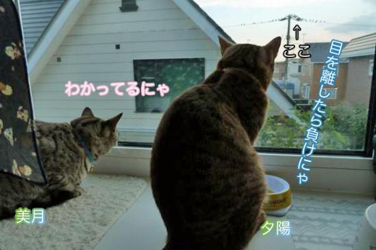 2_20111007084917.jpg
