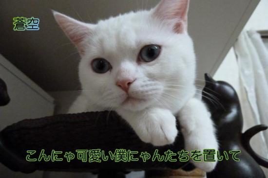 2_20111104100105.jpg
