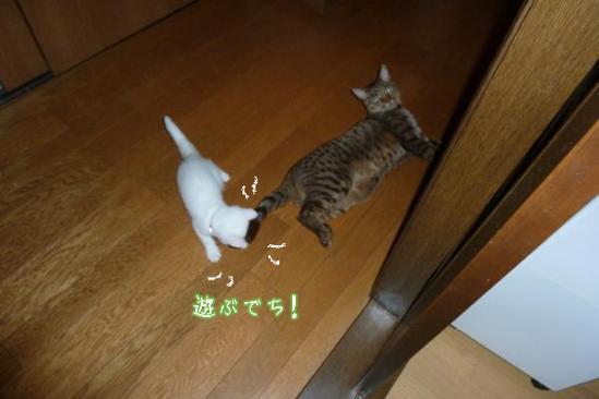3_20110903083722.jpg