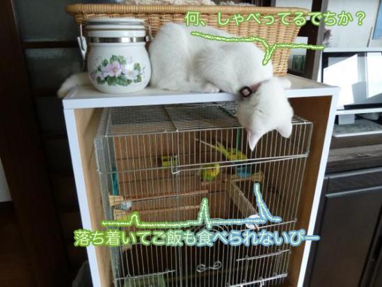 3_20111005194511.jpg