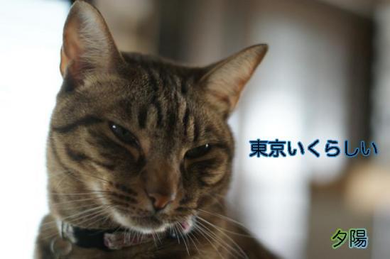 3_20111104100105.jpg