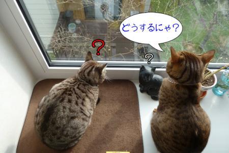 4_20110525091414.jpg