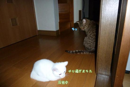 4_20110903083721.jpg