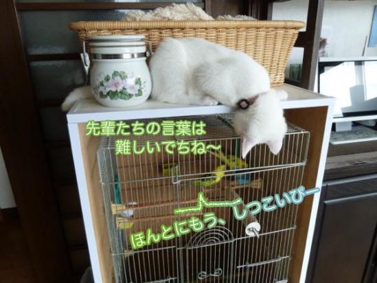 4_20111005194511.jpg