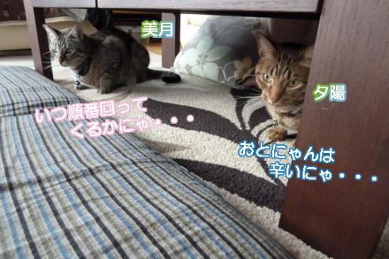 5_20111030235902.jpg