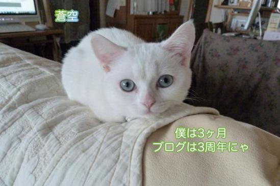6_20111007084916.jpg