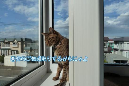 6_20111018105625.jpg