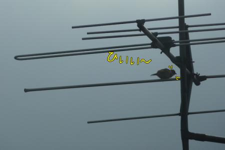7_20110525091326.jpg