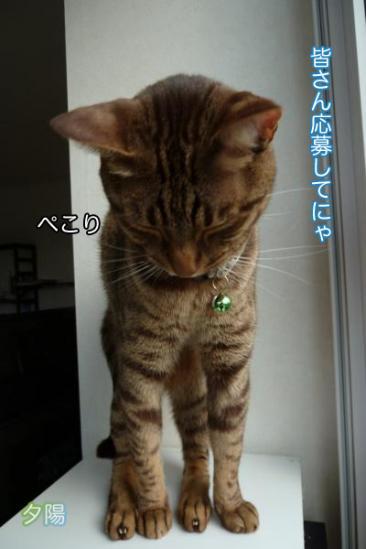 7_20111007084851.jpg