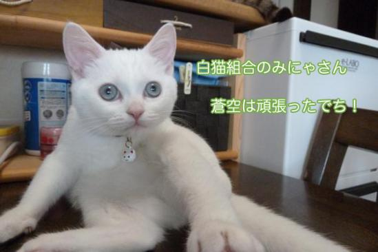 8_20111014092024.jpg