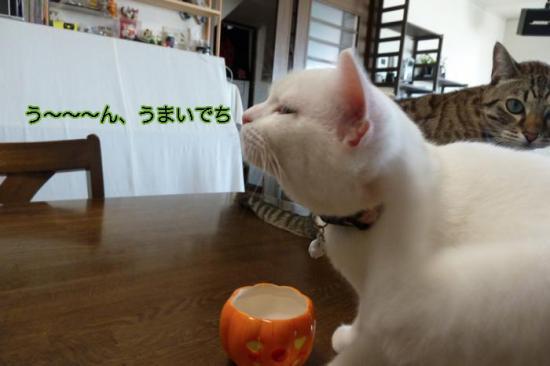 9_20111101143623.jpg