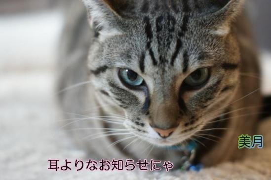 9_20111109074701.jpg