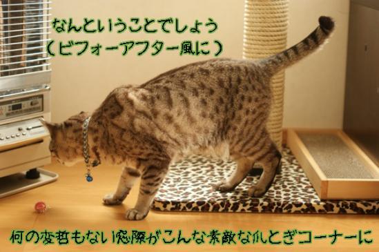 th_DSC00921.jpg