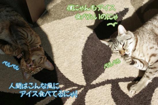 th_DSC01983.jpg