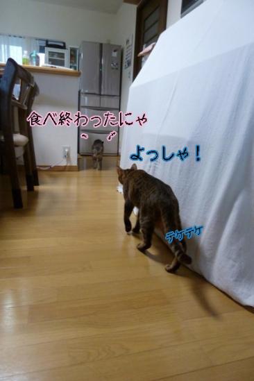 th_P1070417.jpg