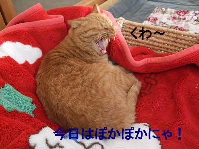2010_01170002.jpg