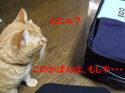 2010_01200003.jpg