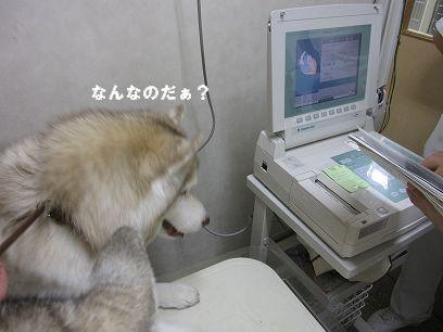 IMG_5626_20100110202324.jpg